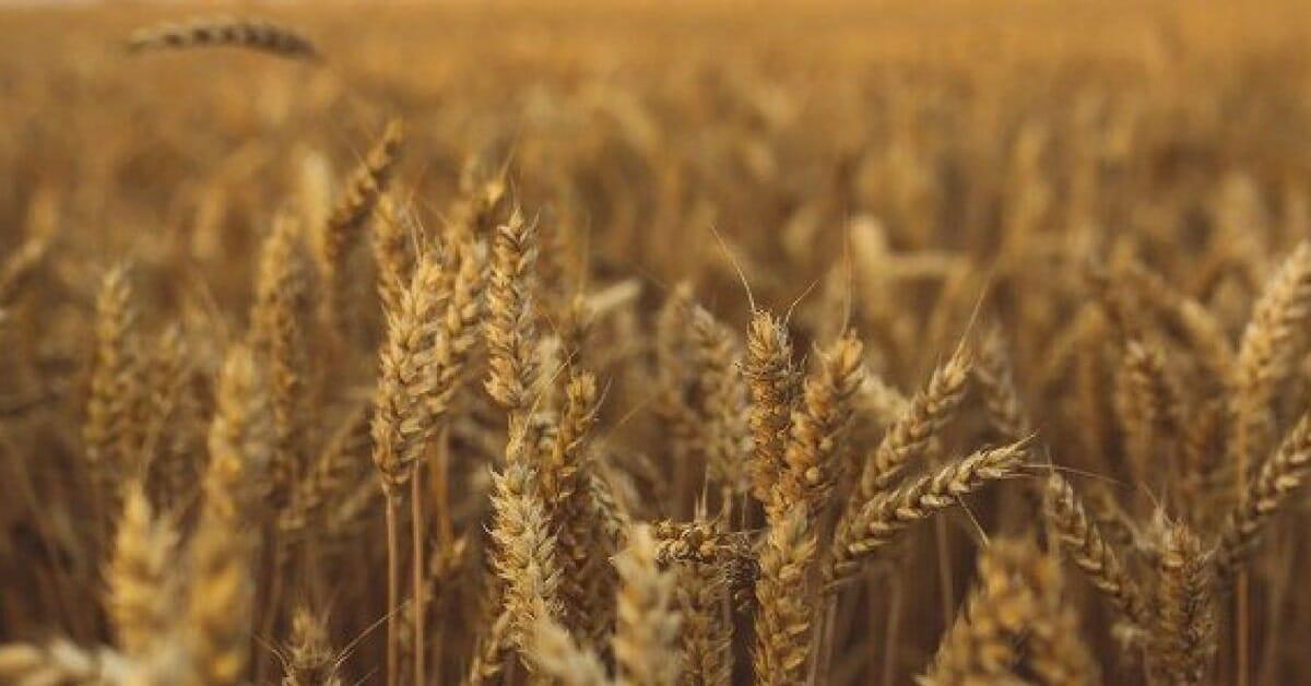 קרקע חקלאית - האם כדאי לרכוש דירה? עורך דין עדי רוזנשטיין